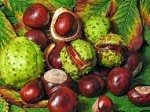 Aesculus Hippocastanum for Constipation: