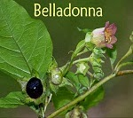 Belladona for Constipation