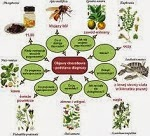 homeopathictherapeutics Homeopathic Therapeutic Gatherings