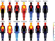 emotions The Vital Approach - Level 3: The way the story/emotions are experienced