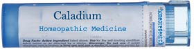 Caladium-homeopathic-remedy Homeopathic Treatment for Impotence for Permanent result